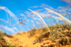 Esponga al sole l'erba con cielo blu nel fuoco molle (tono vivo) Fotografie Stock