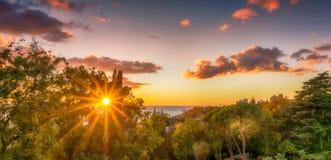 Esponga al sole la scintilla attraverso gli alberi lungo la costa di Mar Nero Fotografie Stock