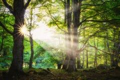 Esponga al sole le punte attraverso la foresta in Entzia, Alava Fotografia Stock