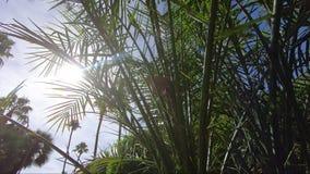 Esponga al sole Shinning tramite le foglie tropicali delle piante di clima con le palme nei precedenti stock footage
