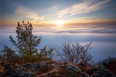 Esponga al sole sopra il landcape delle nuvole con l'albero Fotografia Stock Libera da Diritti