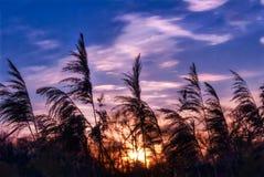 Esponga al sole splendere attraverso le erbacce in una zona umida sulla baia di Chesapeake a fotografie stock