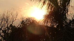 Esponga al sole splendere attraverso smog, palma in giungle L'India stock footage