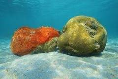 Esponja aburrida roja de la vida marina y coral de cerebro acanalado Fotos de archivo libres de regalías