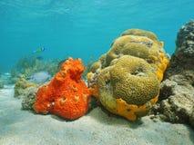 Esponja colorida del mar y coral de cerebro subacuático imagen de archivo