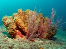Esponja da câmara de ar e pulverizador de mar Fotos de Stock Royalty Free