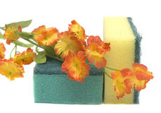 Esponja e flor Imagem de Stock Royalty Free