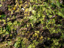 Esponja marina, porifera Imagenes de archivo