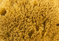 Esponja natural HD do mar Imagens de Stock
