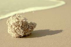 Esponja natural na areia Fotos de Stock Royalty Free
