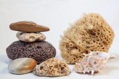 Esponja para bañarse, piedra pómez, piedras del mar del mar. cáscara Imagen de archivo libre de regalías