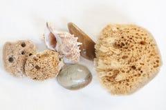 Esponja para bañarse, piedra pómez, piedras del mar del mar. cáscara Imágenes de archivo libres de regalías