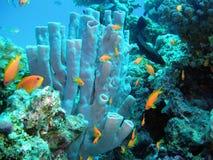 Esponja subaquática Fotografia de Stock