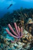 Esponja y buceador marinos en un arrecife de coral en el Caribe foto de archivo libre de regalías