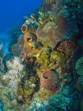 Esponjas coloridas en un filón de la isla del caimán imágenes de archivo libres de regalías