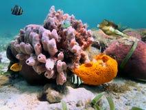 Esponjas do mar e peixes tropicais Imagem de Stock