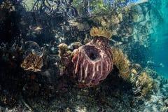 Esponjas e corais na borda da floresta dos manguezais Fotografia de Stock Royalty Free