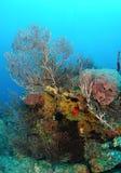 Esponjas en el filón coralino Foto de archivo libre de regalías