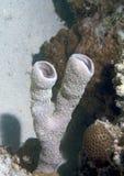 Esponjas subaquáticas   Fotografia de Stock