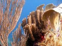 Esponjas y ventiladores de mar Imagenes de archivo