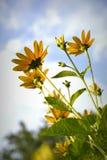 Esporre al sole i fiori fotografia stock libera da diritti