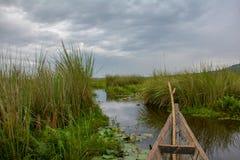 Esporte de barco através do pântano de Mabamba dos estreitos fotos de stock royalty free