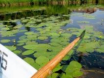 Esporte de barco a lagoa com lírios de água em um dia ensolarado no verão imagens de stock royalty free