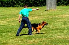 Esporte do cão Imagem de Stock