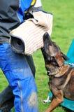 Esporte do cão Fotografia de Stock Royalty Free