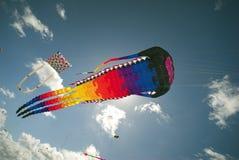 Esporte do papagaio da ação Imagem de Stock Royalty Free