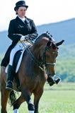 Esporte equestre. Cavaleiro fêmea do dressage Foto de Stock