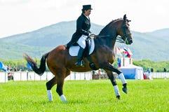 Esporte equestre. Cavaleiro fêmea do dressage Imagem de Stock Royalty Free