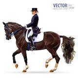 Esporte equestre Jóquei da amazona no cavalo de equitação uniforme fora dressage Isolado no fundo branco Jóquei sobre Imagem de Stock