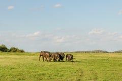 Esportes dos elefantes imagens de stock