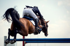 Esportes equestres Imagem de Stock