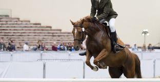 Esportes equestres, cavalo que salta, mostra que salta, equita??o foto de stock royalty free