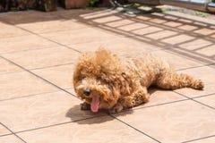 Esposizione al sole del cane come terapia per alleviare pelle che prude fotografia stock libera da diritti