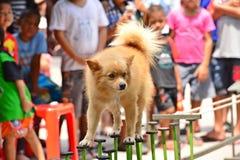 Esposizione canina Fotografia Stock