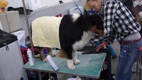 Esposizione canina internazionale CACIB-FCI video d archivio