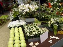 Esposizione degli ortaggi e dei fiori bianchi Fotografia Stock Libera da Diritti