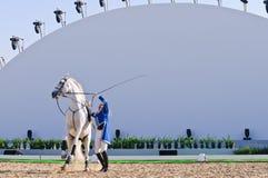 Esposizione degli Stallions di Lipizzan Fotografia Stock Libera da Diritti