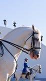 Esposizione degli Stallions di Lipizzan Fotografia Stock