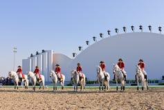 Esposizione degli Stallions di Lipizzan Immagine Stock