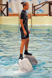 Esposizione dei delfini Immagini Stock Libere da Diritti