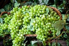 Esposizione dei mazzi di uva bianca fresca Immagini Stock