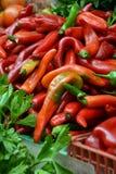 Esposizione dei peperoncini freschi, dei peperoni dolci e dei verdi immagine stock libera da diritti