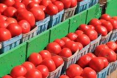 Esposizione dei pomodori rossi maturi in contenitori blu della pinta Fotografia Stock Libera da Diritti