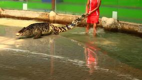 Esposizione del coccodrillo in Tailandia archivi video