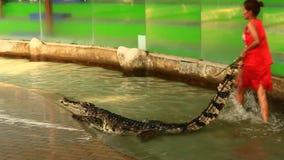 Esposizione del coccodrillo in Tailandia stock footage