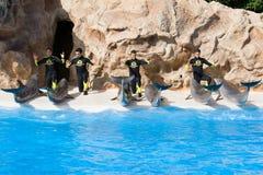 Esposizione del delfino a Loro Parque fotografia stock libera da diritti